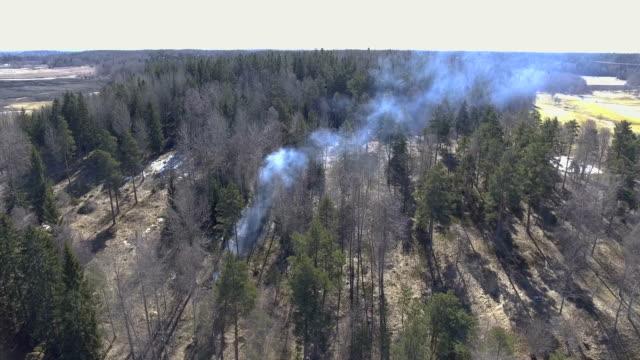 flygande över en eld i skogen - pine forest sweden bildbanksvideor och videomaterial från bakom kulisserna