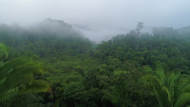 Flying above a jungle with clouds and mist Flying above a jungle with clouds and mist rainforest stock videos & royalty-free footage