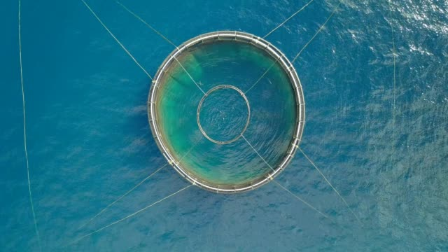 vídeos de stock e filmes b-roll de flying above a large pool full of salmon on fish farm - comida sustentavel