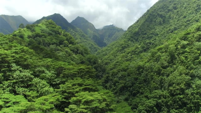 AERIAL: Flying above beautiful lush green jungle with palm trees and dense acacia trees growing on big mountains on tropical island in sunny summer video
