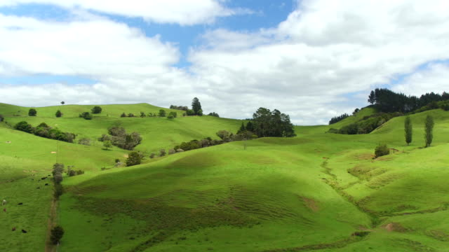 AERIAL: Flying above beautiful lush green landscape in New Zealand with green meadow fields and high mountains