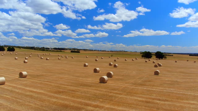 AERIAL: Flying above beautiful straight golden field of bales of hay and straw video