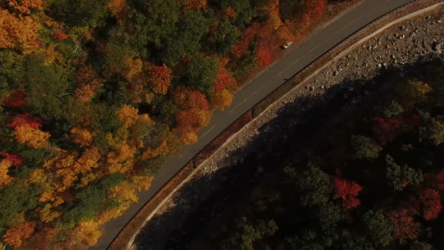 Flying Above Fall Colored Trees video