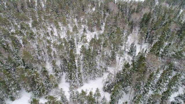 flygande ovanför skogen - pine forest sweden bildbanksvideor och videomaterial från bakom kulisserna