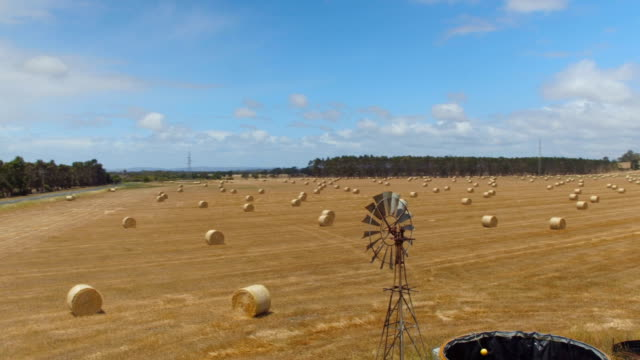 AERIAL: Flying above golden field of bales on old fashioned windmill farm video