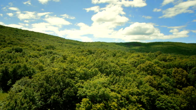 Video HD: Flying Above Green Treetops