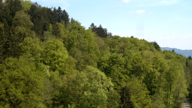 AERIAL: Flying above lush green forest in sunny spring video