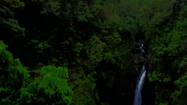 Flying Above Pools of Water and Waterfalls in Thick Lush Forest