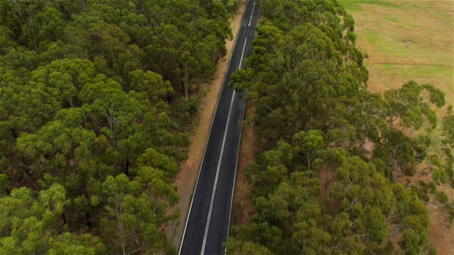 AERIAL: Flying above straight wide empty road in the middle of eucalyptus forest video