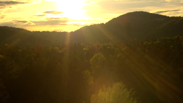 AERIAL: Flying above the beautiful green forest at golden sunset video