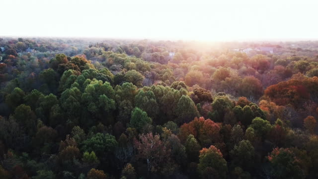 Flying above the stunning colorful treetops in Louisville with skyline in background and leaves turning colors on sunny morning. Beautiful autumn trees in yellow, orange and red forest on sunny autumn day. Fall foliage in autumn forest