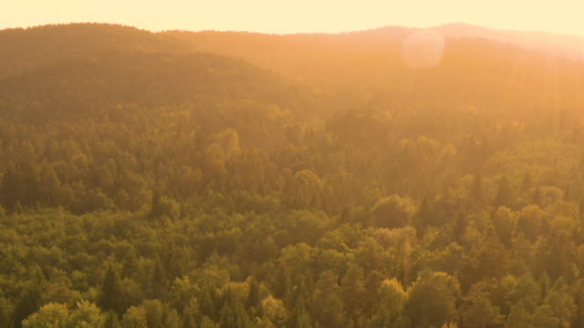 drone: flying above the vast coniferous forest on an idyllic summer evening. - flare video stock e b–roll