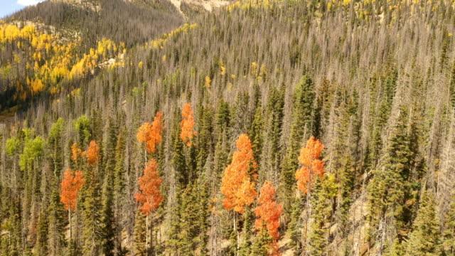 vídeos de stock, filmes e b-roll de voando acima dos treetops em aspen colorado - condado de pitkin