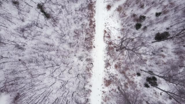flying above white winter forest road, top view winter drone aerial - sezione superiore video stock e b–roll