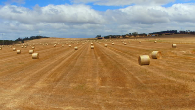 AERIAL: Flying across the width of big golden endless field of bales of haystack video