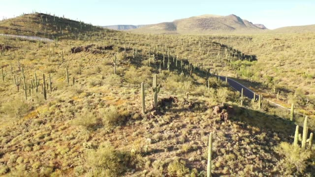 Flying around a mountain top full of saguaro cacti while moving away from them