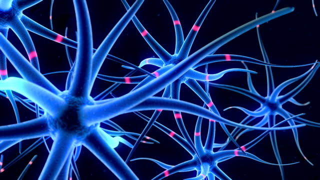Flying around nerve cells video