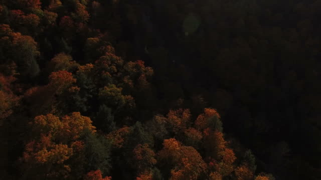 Flying Away from Beautiful Fall Foliage video