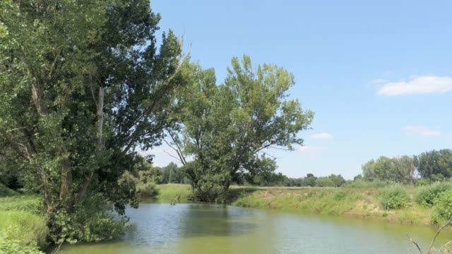 flying backwards from an elm tree through a river  -  aerial footage video