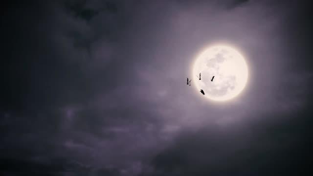 Flying bats at night video