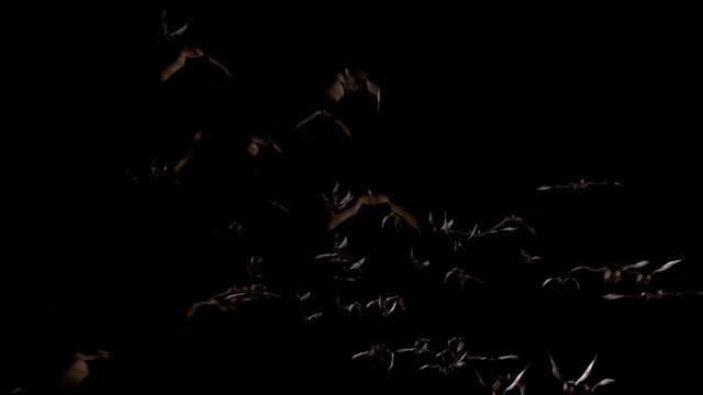 Flying bats. Version 01 video