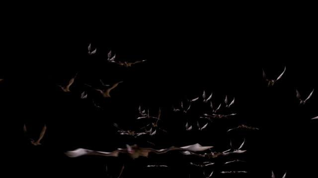 Flying bats. Version 02 video
