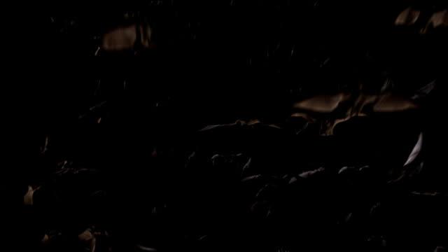 Flying bats. Version 03 video