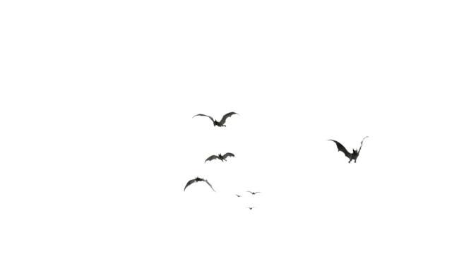Flying Bats video