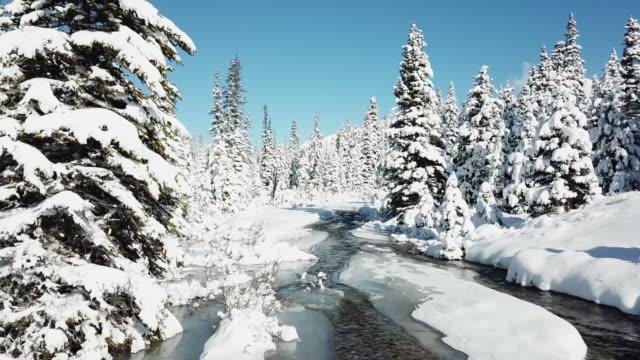 flygande mellan snowy på pine tree med ström - djupsnö bildbanksvideor och videomaterial från bakom kulisserna