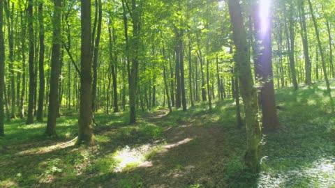 vídeos de stock e filmes b-roll de aerial flying between trees - floresta