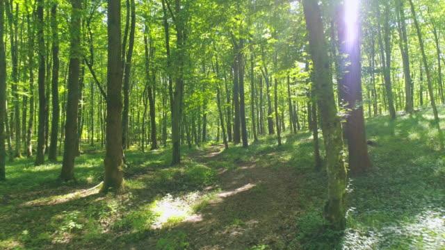 vídeos de stock, filmes e b-roll de aéreo voando entre as árvores - forest