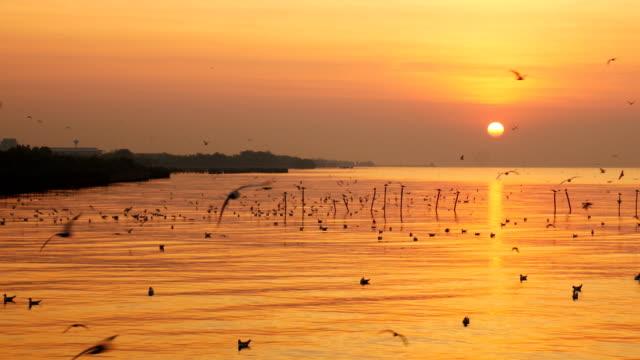 flying birds with sunrise at Bangpu Recreation Center, Samut Prakan Province, Thailand. video
