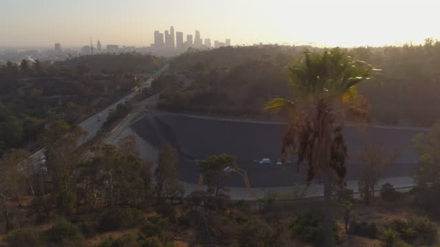 Flying by palm trees over a Los Angeles park video