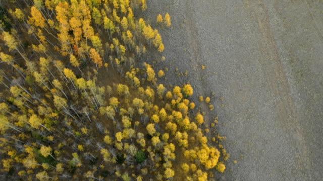 vídeos de stock, filmes e b-roll de voando fechar acima aspens reunião seco riverbed - condado de pitkin