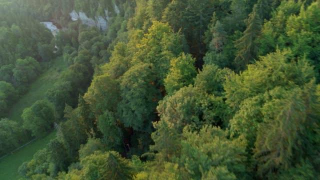vídeos de stock, filmes e b-roll de voando perto sobre árvores ao nascer do sol - forest