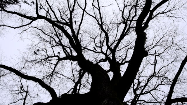 flying crows over tree. - fronda video stock e b–roll