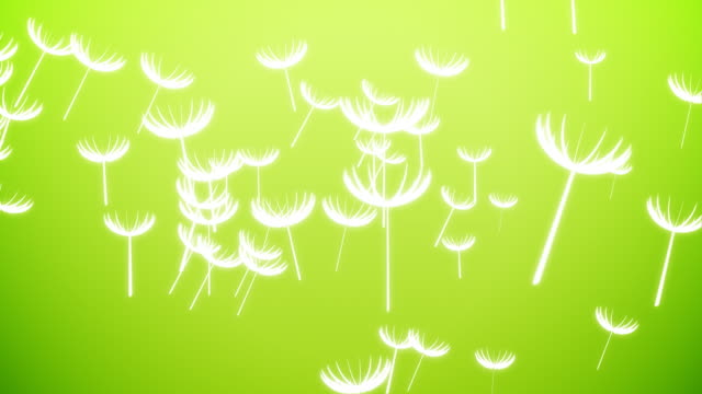 Flying Dandelions video