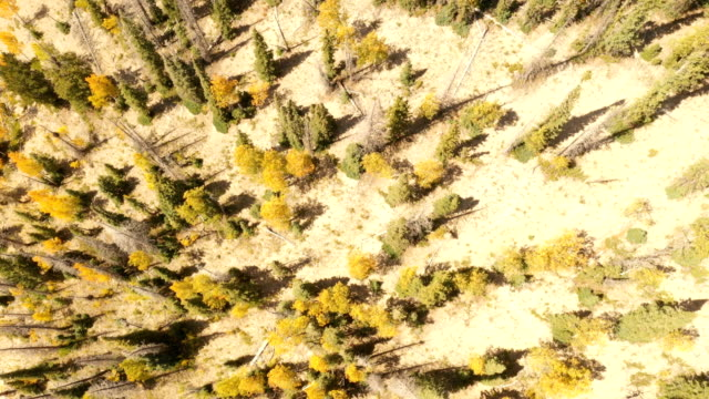 vídeos de stock, filmes e b-roll de voando diretamente acima da floresta do pinho em colorado - condado de pitkin