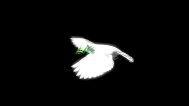 volo colomba con morph e alfa - colomba video stock e b–roll