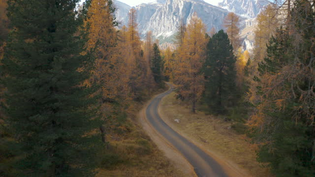 flying down to small road running through a larch tree forest  in the Dolomites video