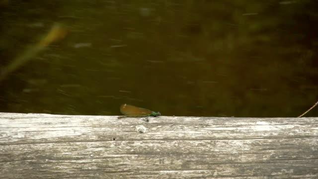 A flying dragonfly 4K FS700 Odyssey 7Q video
