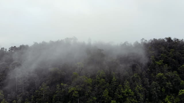 flying drone into cloudscape to explore the forested mountain - pianta sempreverde video stock e b–roll