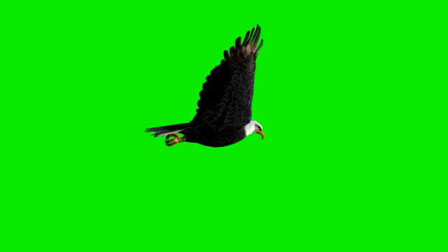 Flying Eagle Green Screen (Loopable) video