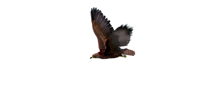 Flying eagle on isolate white background Flying eagle on isolate white background eagle bird stock videos & royalty-free footage