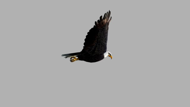 Flying Eagle with Alpha Channel (Loopable) Design Element eagle bird stock videos & royalty-free footage