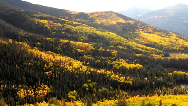 vídeos de stock, filmes e b-roll de voando muito acima do campo maciço de árvores de aspen - condado de pitkin