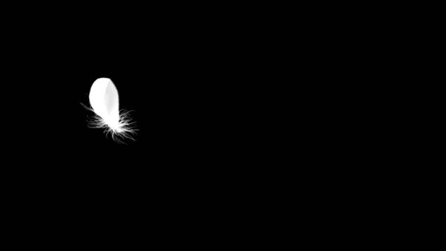 4K. Flying Feather On Black Background. Seamless Looping.