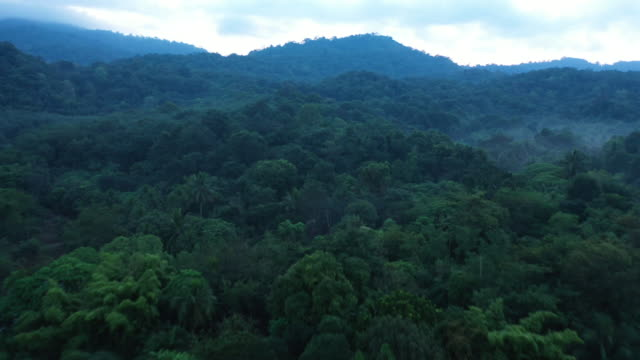 Flying forward of rainforest in real time