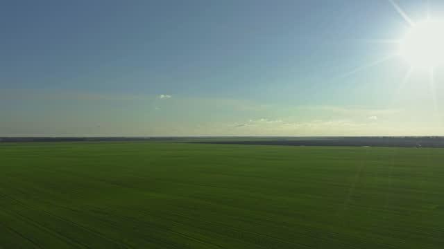 vídeos de stock e filmes b-roll de flying high above green planted field of winter wheat or rye, small airplane pov - linha do horizonte sobre terra