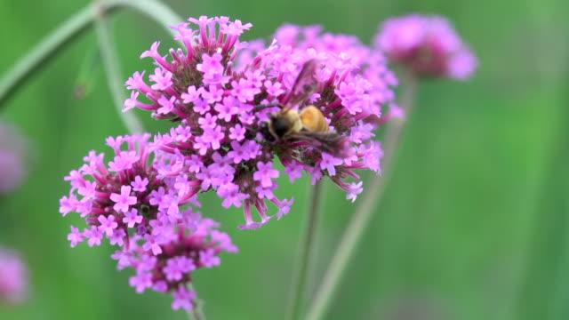 Flying honeybees with flower